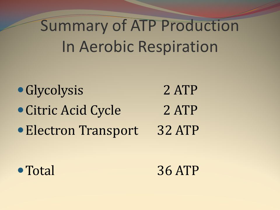 Summary of ATP Production In Aerobic Respiration Glycolysis 2 ATP Citric Acid Cycle 2 ATP Electron Transport 32 ATP Total 36 ATP
