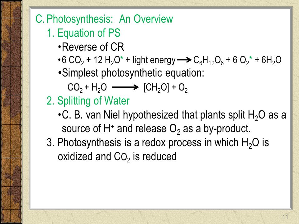 C.Photosynthesis: An Overview 1. Equation of PS Reverse of CR 6 CO 2 + 12 H 2 O* + light energy C 6 H 12 O 6 + 6 O 2 * + 6H 2 O Simplest photosyntheti