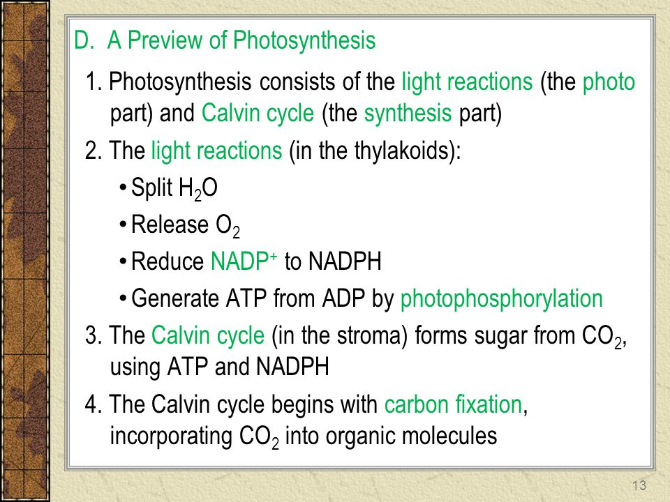 D. A Preview of Photosynthesis 1. Photosynthesis consists of the light reactions (the photo part) and Calvin cycle (the synthesis part) 2. The light r