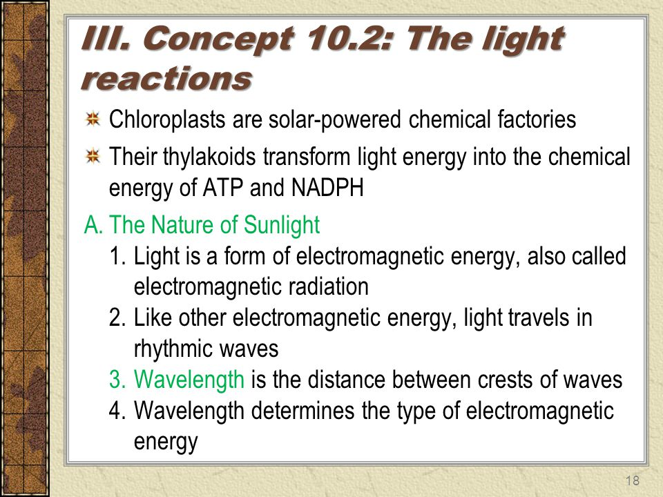 III. Concept 10.2: The light reactions Chloroplasts are solar-powered chemical factories Their thylakoids transform light energy into the chemical ene
