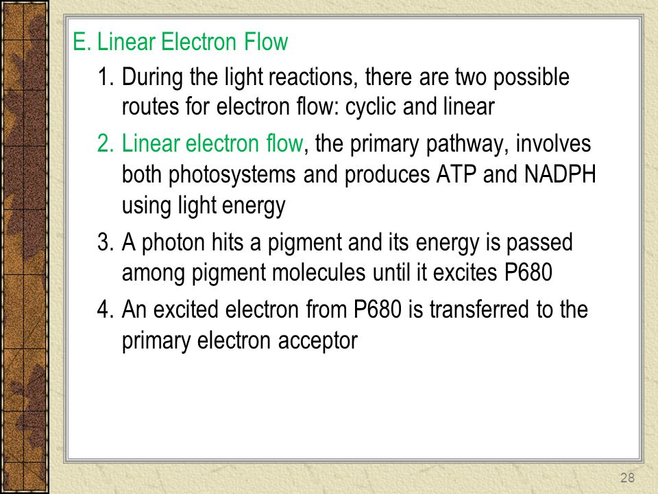 E.Linear Electron Flow 1.During the light reactions, there are two possible routes for electron flow: cyclic and linear 2.Linear electron flow, the pr