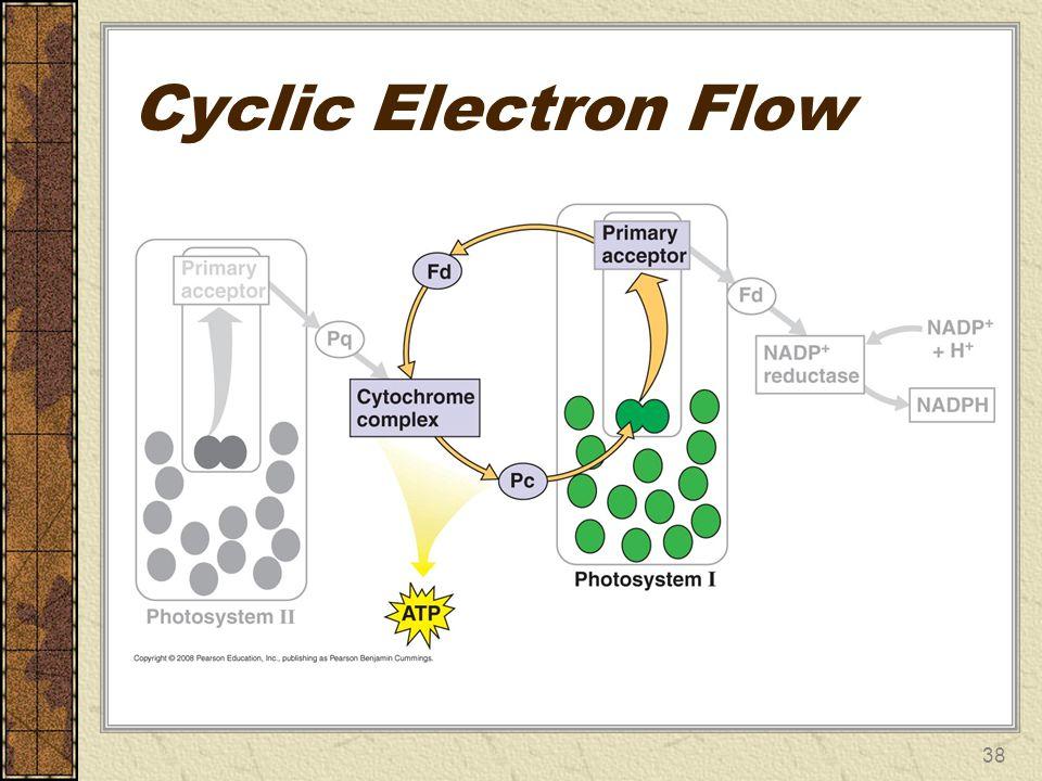 Cyclic Electron Flow 38