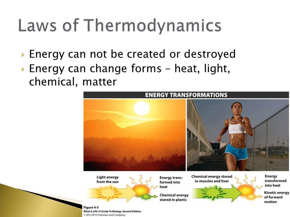 A) Fermentation is a less efficient energy producer than aerobic respiration.