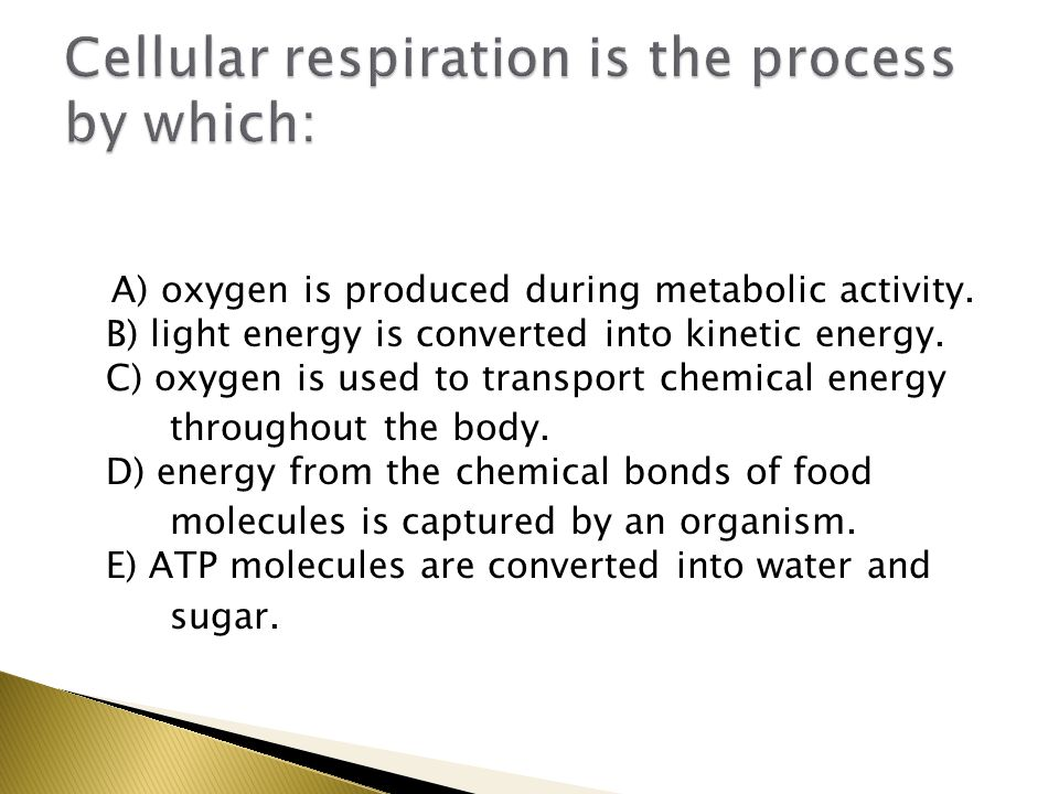 A) oxygen is produced during metabolic activity. B) light energy is converted into kinetic energy.
