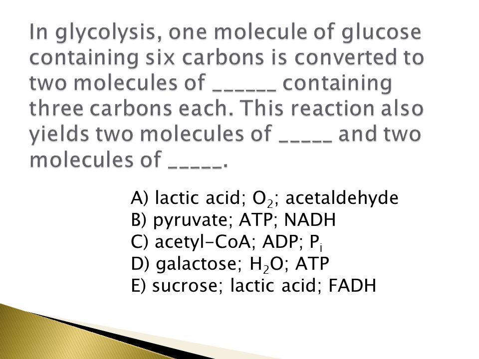 A) lactic acid; O 2 ; acetaldehyde B) pyruvate; ATP; NADH C) acetyl-CoA; ADP; P i D) galactose; H 2 O; ATP E) sucrose; lactic acid; FADH