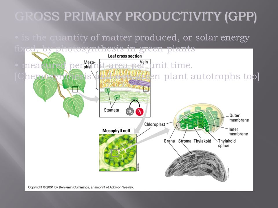 GROSS PRIMARY PRODUCTIVITY (GPP) is the quantity of matter produced, or solar energy fixed, by photosynthesis in green plants measured per unit area per unit time.