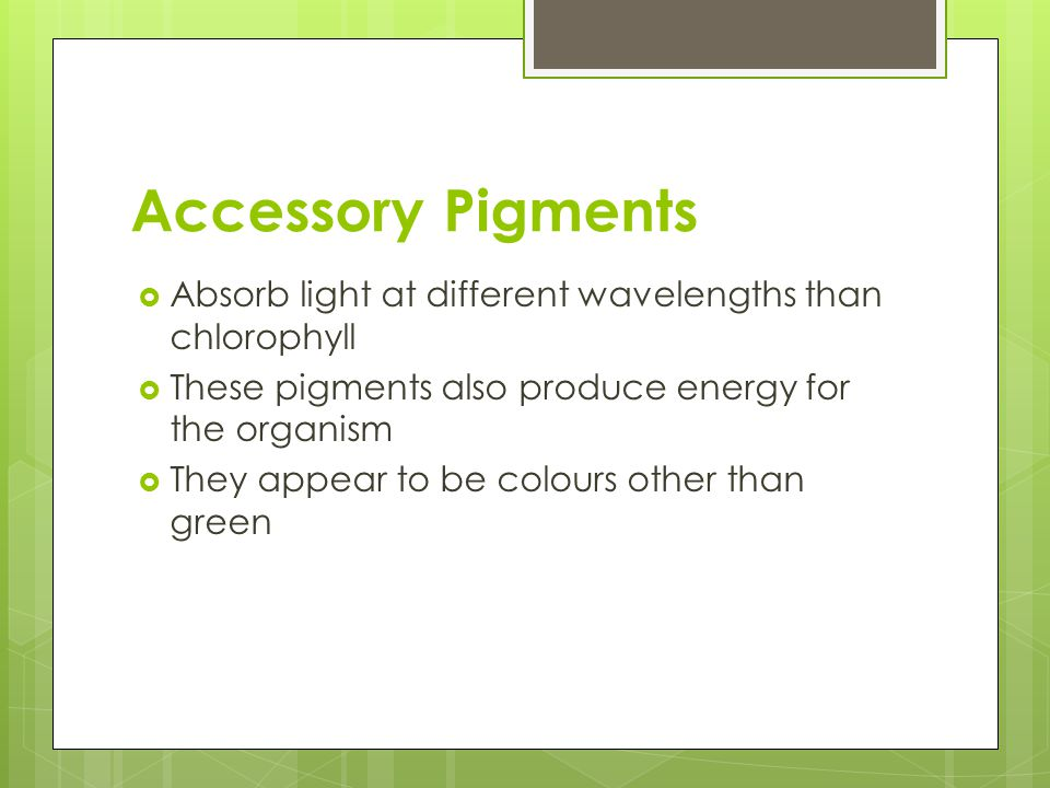 Accessory Pigments  Absorb light at different wavelengths than chlorophyll  These pigments also produce energy for the organism  They appear to be