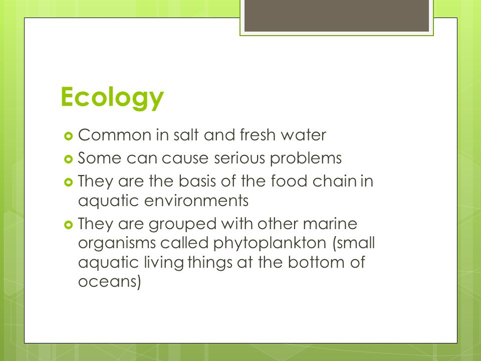 Ecology  Common in salt and fresh water  Some can cause serious problems  They are the basis of the food chain in aquatic environments  They are g