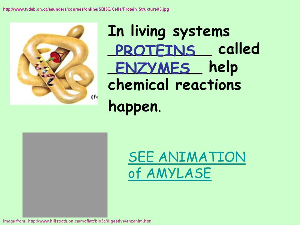 In living systems ___________ called __________ help chemical reactions happen. Image from: http://www.hillstrath.on.ca/moffatt/bio3a/digestive/enzani