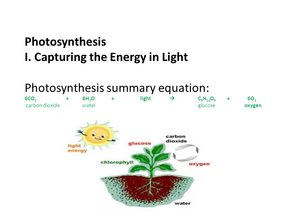 Photosynthesis I. Capturing the Energy in Light Photosynthesis summary equation: 6CO 2 + 6H 2 O + light  C 6 H 12 O 6 + 6O 2 carbon dioxide water glu