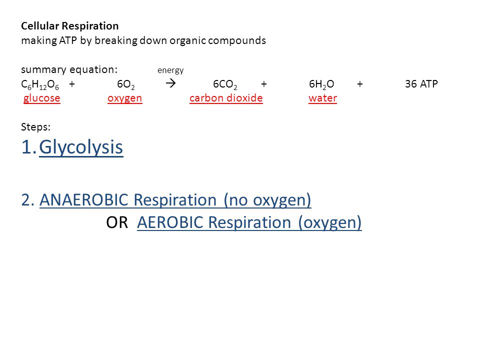 Cellular Respiration making ATP by breaking down organic compounds summary equation: energy C 6 H 12 O 6 +6O 2  6CO 2 +6H 2 O+36 ATP glucose oxygen c