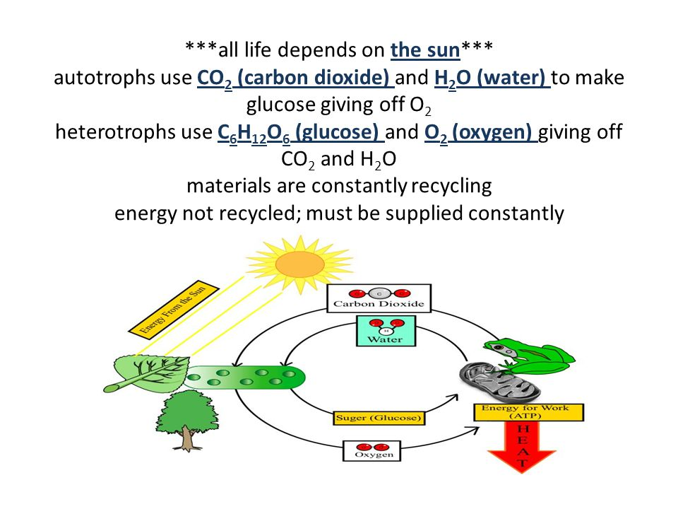 ***all life depends on the sun*** autotrophs use CO 2 (carbon dioxide) and H 2 O (water) to make glucose giving off O 2 heterotrophs use C 6 H 12 O 6