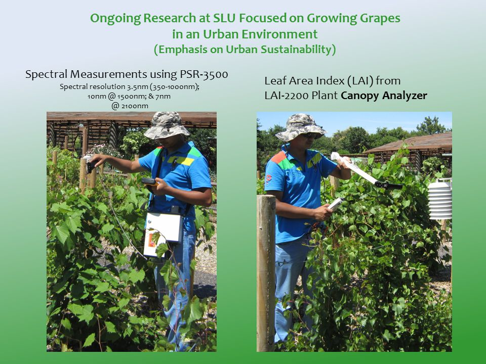 Spectral Measurements using PSR-3500 Spectral resolution 3.5nm (350-1000nm); 10nm @ 1500nm; & 7nm @ 2100nm Leaf Area Index (LAI) from LAI-2200 Plant Canopy Analyzer Ongoing Research at SLU Focused on Growing Grapes in an Urban Environment (Emphasis on Urban Sustainability)