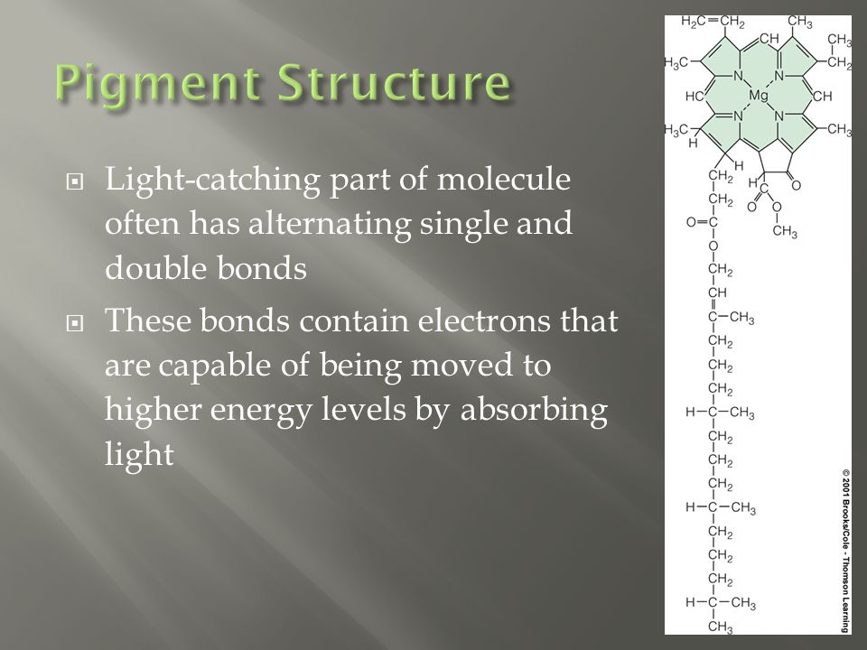  Light-catching part of molecule often has alternating single and double bonds  These bonds contain electrons that are capable of being moved to hig