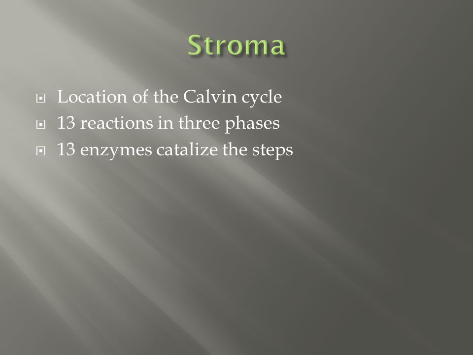  Location of the Calvin cycle  13 reactions in three phases  13 enzymes catalize the steps