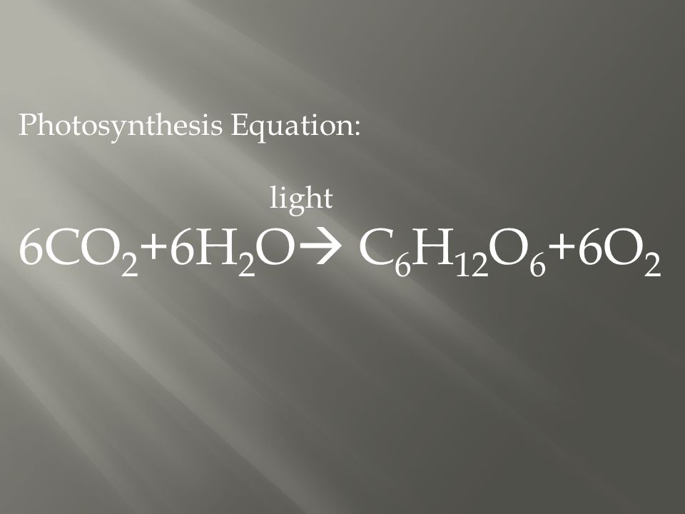 Photosynthesis Equation: light 6CO 2 +6H 2 O  C 6 H 12 O 6 +6O 2