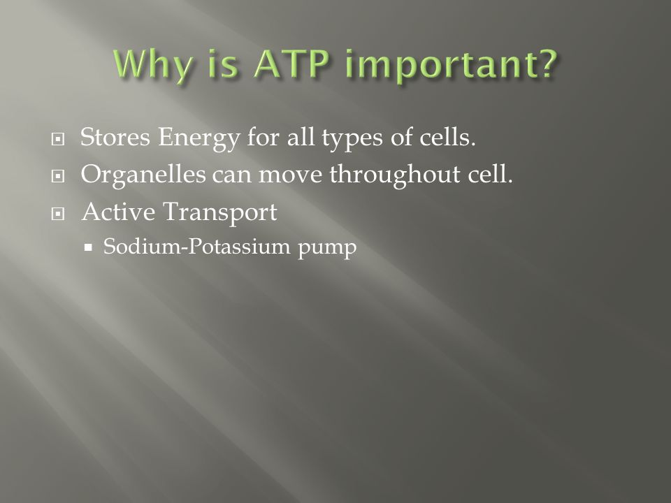  Stores Energy for all types of cells. Organelles can move throughout cell.
