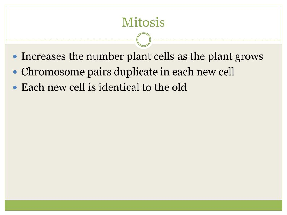Mitosis Increases the number plant cells as the plant grows Chromosome pairs duplicate in each new cell Each new cell is identical to the old