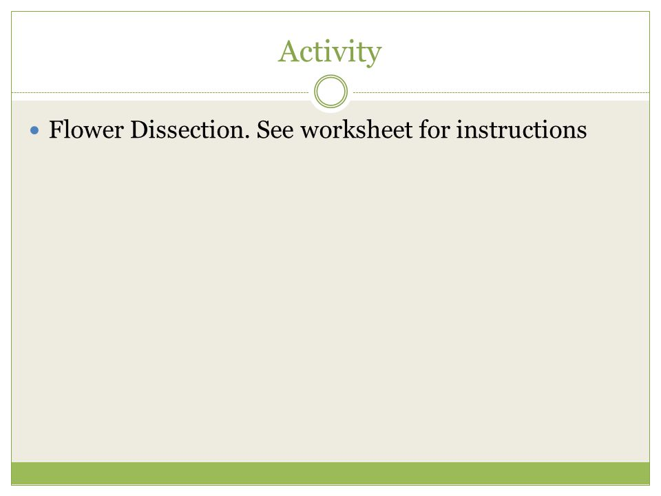 Activity Flower Dissection. See worksheet for instructions