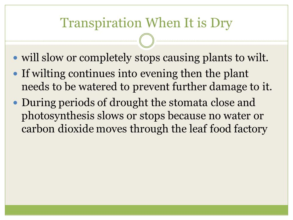 Transpiration When It is Dry will slow or completely stops causing plants to wilt. If wilting continues into evening then the plant needs to be watere