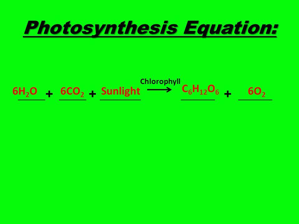 Photosynthesis Equation: ____+ ____ + ______ _____ + _____ C 6 H 12 O 6 6O 2 6H 2 O6CO 2 Sunlight Chlorophyll