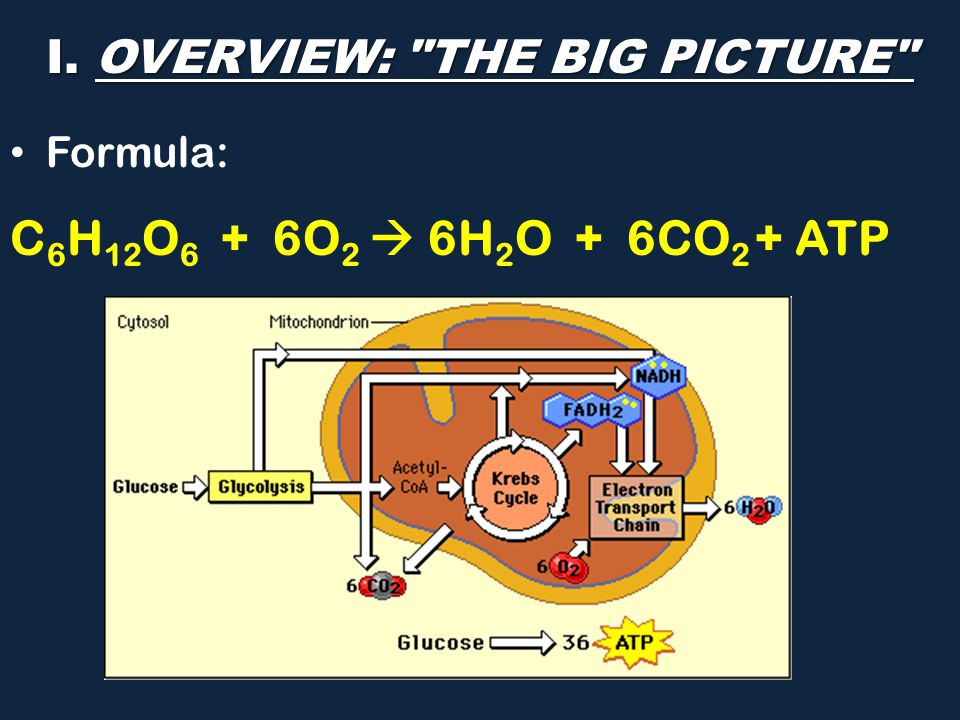 I. OVERVIEW: THE BIG PICTURE Formula: C 6 H 12 O 6 + 6O 2  6H 2 O + 6CO 2 + ATP