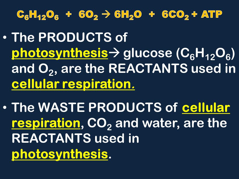 The PRODUCTS of photosynthesis  glucose (C 6 H 12 O 6 ) and O 2, are the REACTANTS used in cellular respiration.