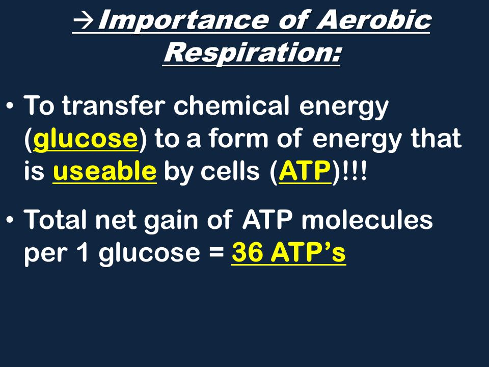  Importance of Aerobic Respiration: To transfer chemical energy (glucose) to a form of energy that is useable by cells (ATP)!!.