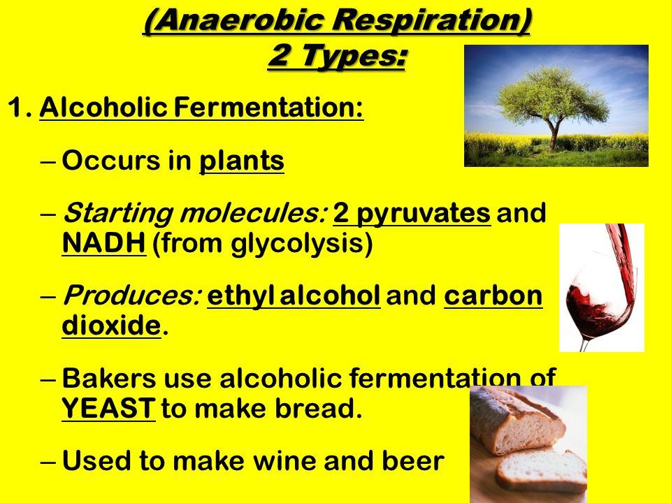 (Anaerobic Respiration) 2 Types: 1.