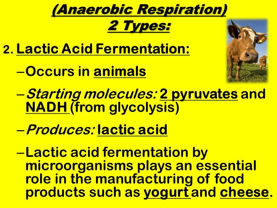 (Anaerobic Respiration) 2 Types: 2.