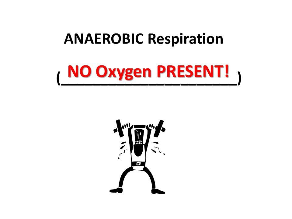ANAEROBIC Respiration (______________________) NO Oxygen PRESENT!