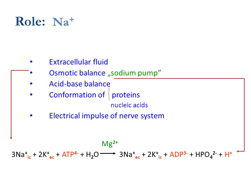 "Na + Role: Na + Extracellular fluid Osmotic balance ""sodium pump Acid-base balance Conformation of proteins nucleic acids Electrical impulse of nerve system Mg 2+ 3Na + ic + 2K + ec + ATP 4- + H 2 O 3Na + ec + 2K + ic + ADP 3- + HPO 4 2- + H +"