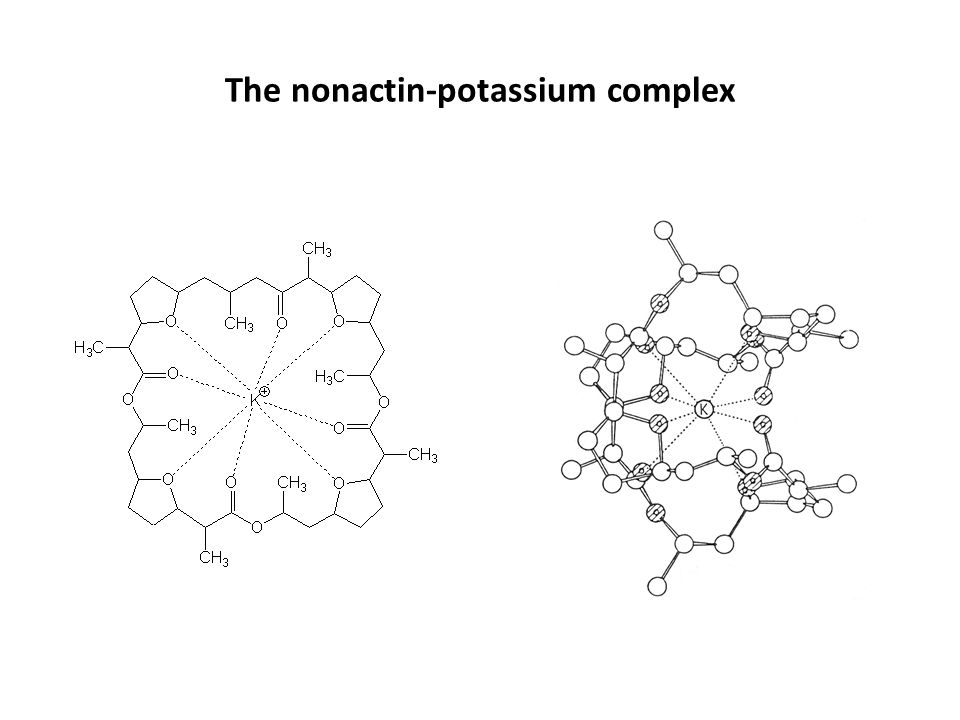 The nonactin-potassium complex
