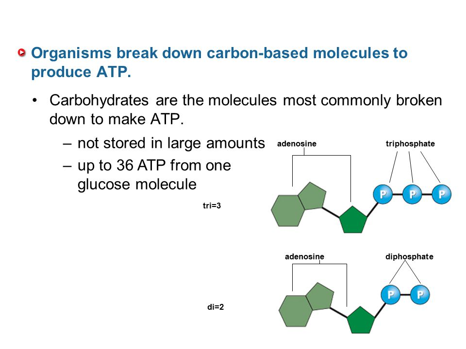 Organisms break down carbon-based molecules to produce ATP. Carbohydrates are the molecules most commonly broken down to make ATP. –not stored in larg