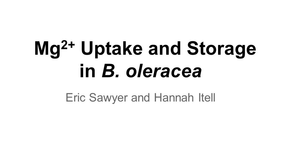 Mg 2+ Uptake and Storage in B. oleracea Eric Sawyer and Hannah Itell
