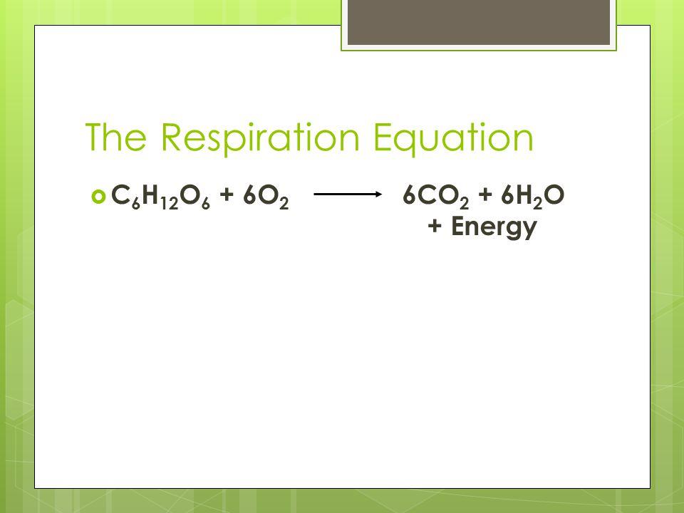 The Respiration Equation  C 6 H 12 O 6 + 6O 2 6CO 2 + 6H 2 O + Energy