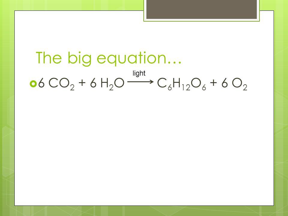 The big equation… 66 CO 2 + 6 H 2 O C 6 H 12 O 6 + 6 O 2 light