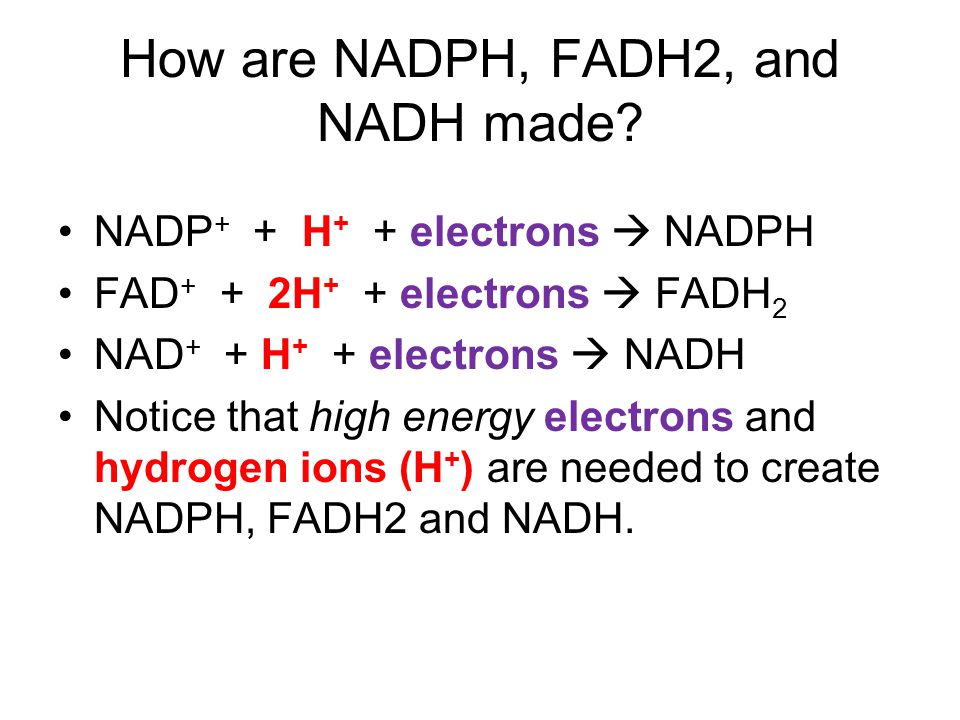 How are NADPH, FADH2, and NADH made.