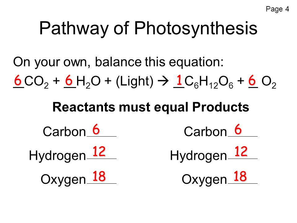 Pathway of Photosynthesis On your own, balance this equation: CO 2 + H 2 O + (Light)  C 6 H 12 O 6 + O 2 Reactants must equal Products 166 6 Carbon Hydrogen Oxygen Carbon Hydrogen Oxygen 6 12 6 12 1818 Page 4