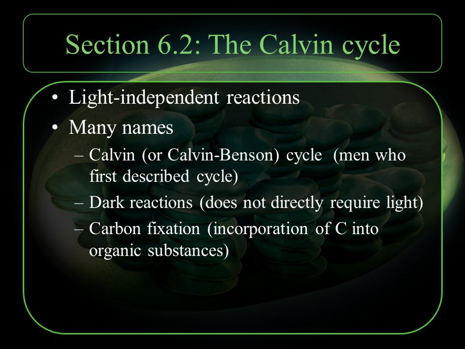 Section 6.2: The Calvin cycle Light-independent reactions Many names –Calvin (or Calvin-Benson) cycle (men who first described cycle) –Dark reactions