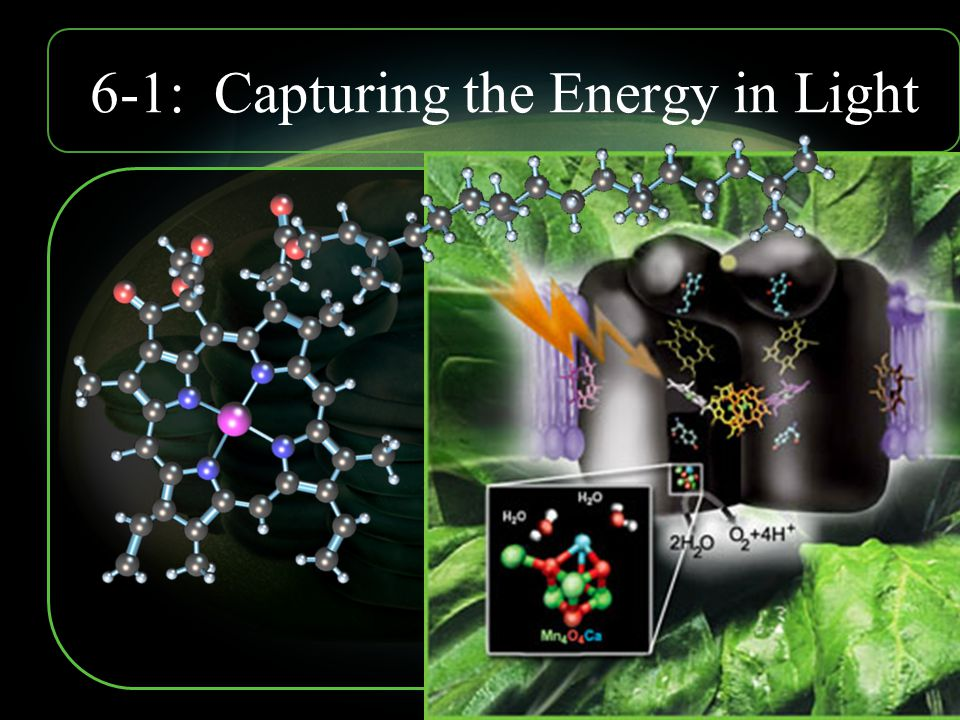 6-1: Capturing the Energy in Light