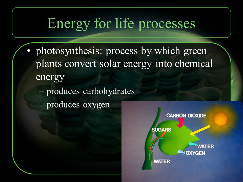Energy for life processes photosynthesis: process by which green plants convert solar energy into chemical energy –produces carbohydrates –produces ox