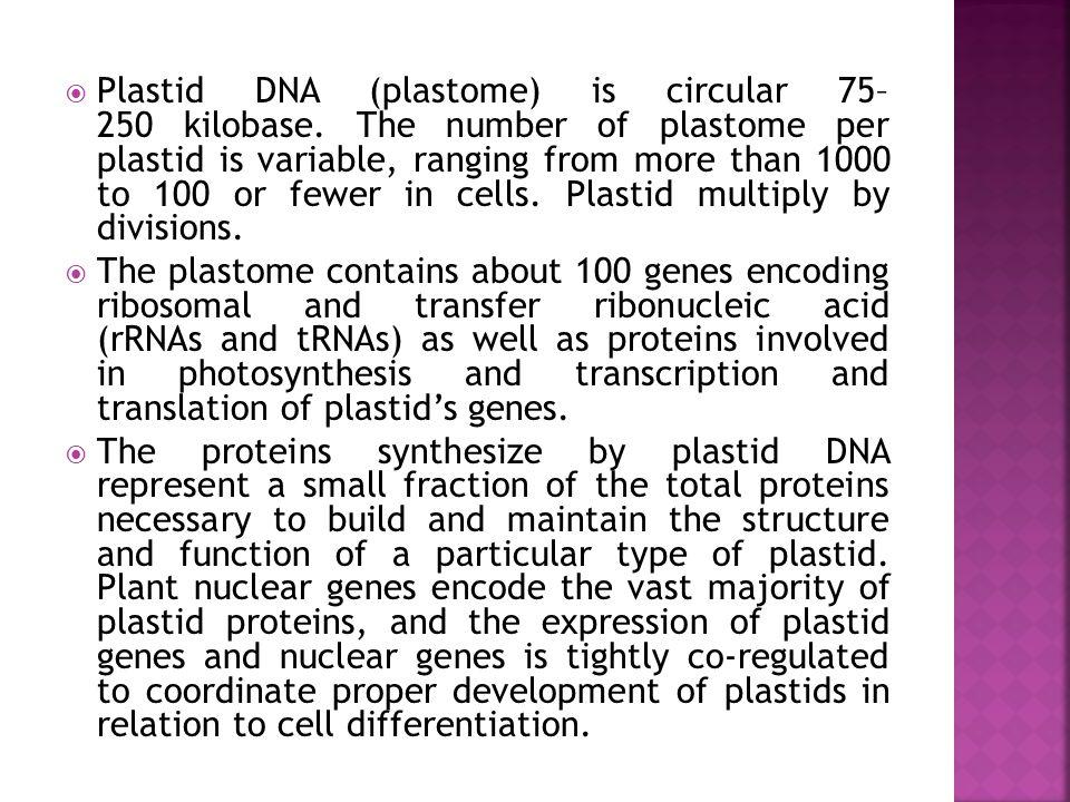  Plastid DNA (plastome) is circular 75– 250 kilobase.