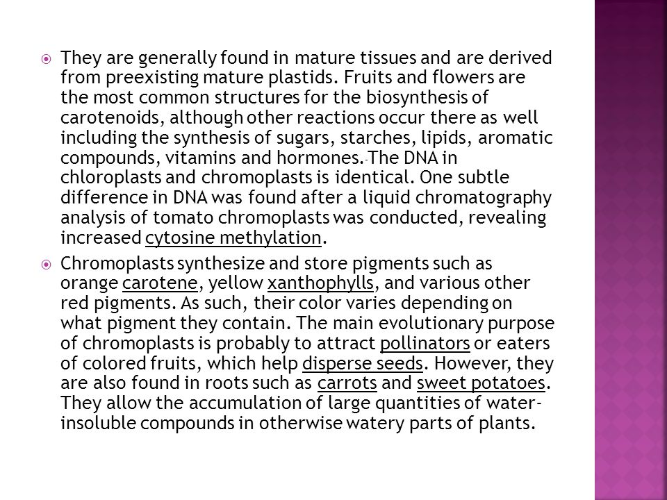  They are generally found in mature tissues and are derived from preexisting mature plastids.