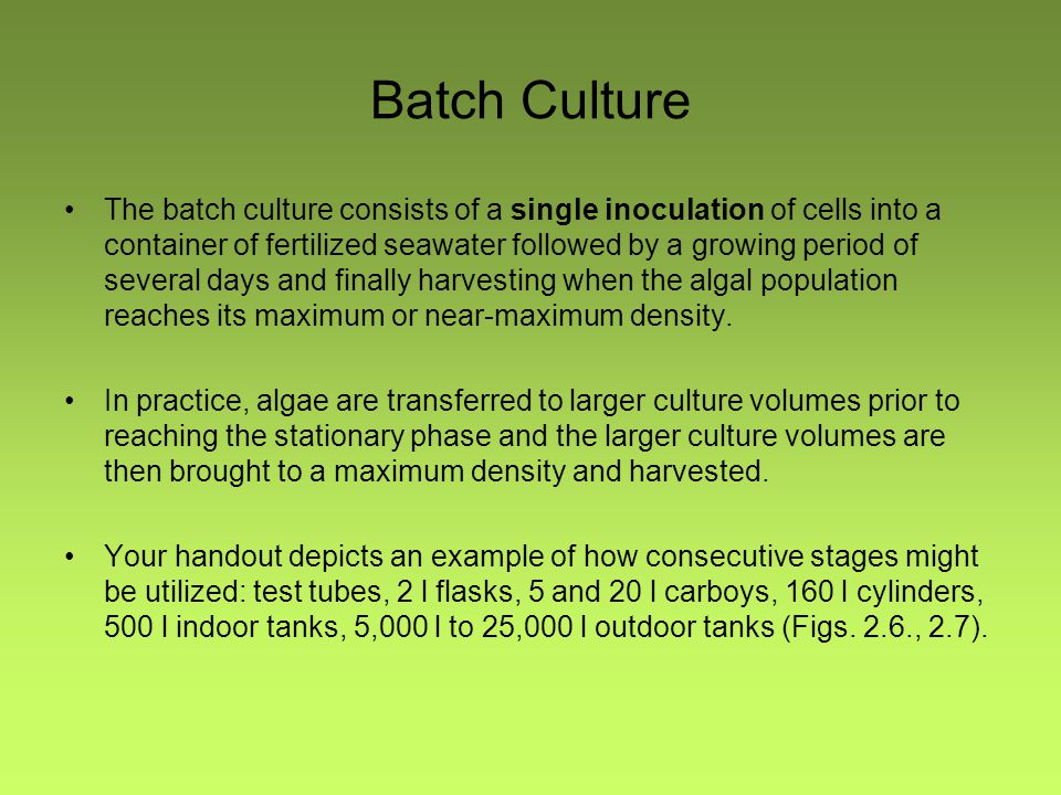 Batch Culture The batch culture consists of a single inoculation of cells into a container of fertilized seawater followed by a growing period of seve