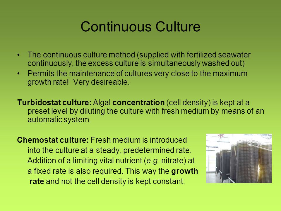 Continuous Culture The continuous culture method (supplied with fertilized seawater continuously, the excess culture is simultaneously washed out) Per