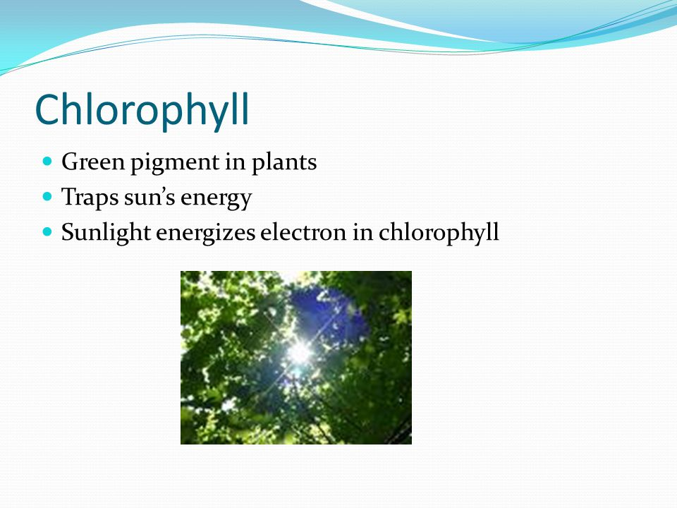 Pigment Molecules that absorb specific wavelengths of light Chlorophyll absorbs reds & blues and reflects green Xanthophyll absorbs red, blues, greens & reflects yellow Carotenoids reflect orange