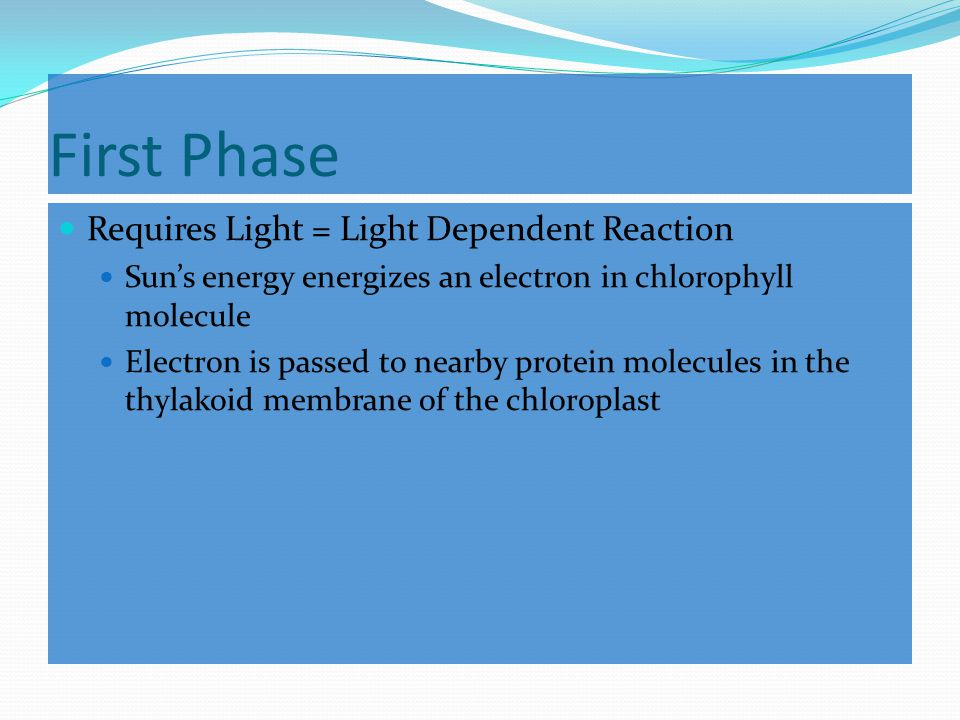 Happens in two phases Light-Dependent Reaction Converts light energy into chemical energy Light-Independent Reaction Produces simple sugars (glucose) General Equation 6 CO 2 + 6 H 2 O  C 6 H 12 O 6 + 6 O 2