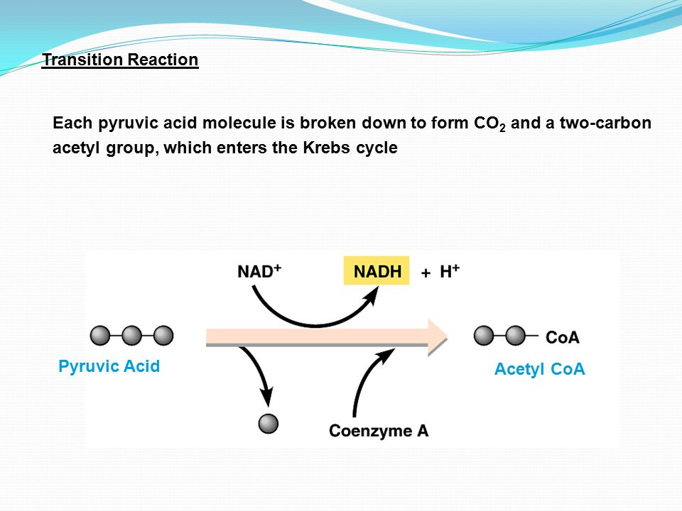 General Outline of Aerobic Respiration Glycolysis Krebs Cycle Electron Transport System Transition Reaction