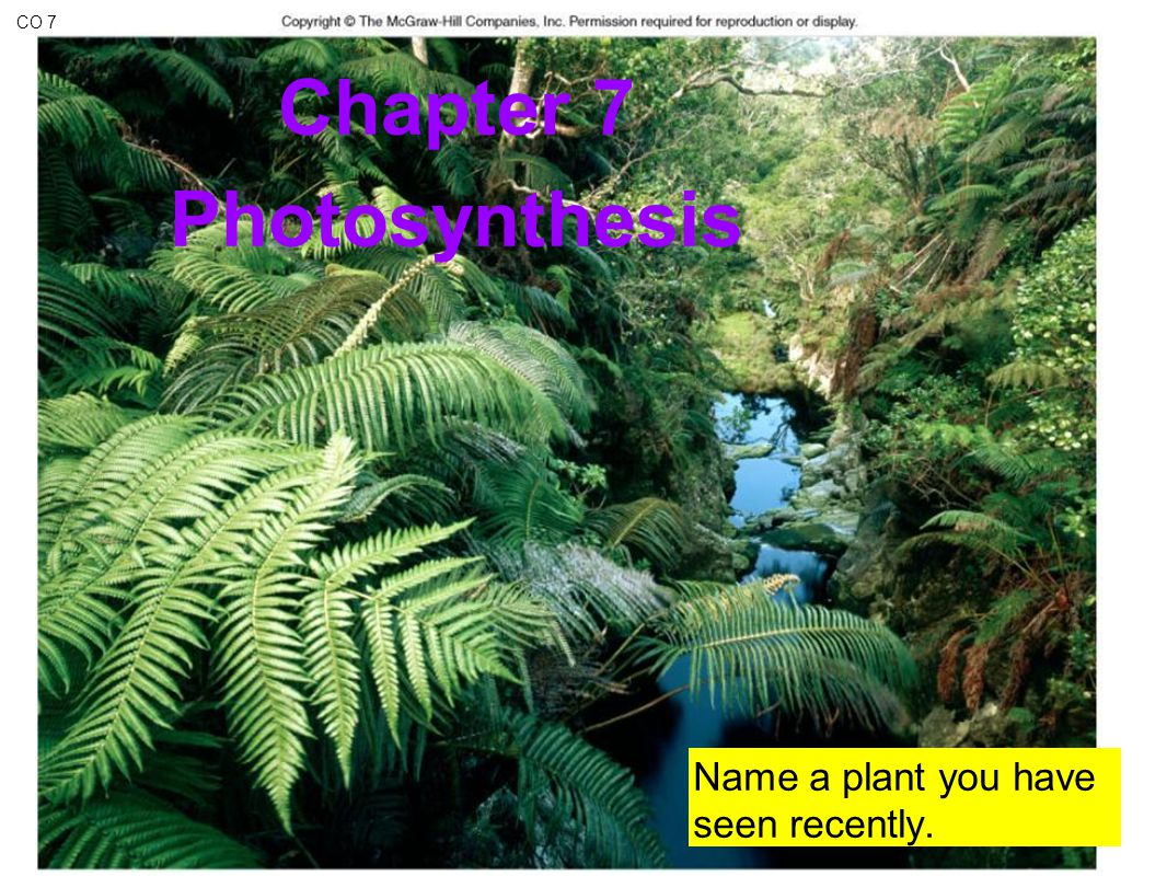 e e e e sun 5 Photosystem II P680 chlorophyll a Photosystem I P700 chlorophyll b e e ETC of Photosynthesis e e fill the e – vacancy